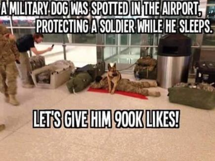 SOLDIERS AND HIS DOG